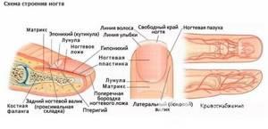 Ушиб ногтя на руке и ноге: что делать в домашних условиях