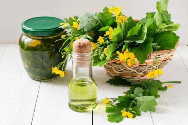 Чистотел полезные свойства и противопоказания. Лечение маслом, соком, настоем, отваром чистотела