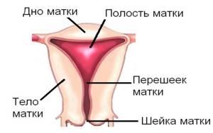 Рак матки: симптомы, лечение, причины, диагностика, стадии, прогноз
