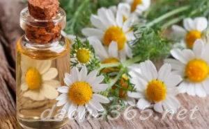 Ромашка аптечная: лечебные свойства, противопоказания, как применять,