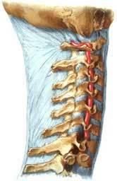 Причины и лечение боли в шее и: голове, ухе, правом или левом плече, мышцах спины