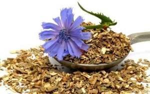Цикорий растворимый: противопоказания, полезные свойства, польза и вред
