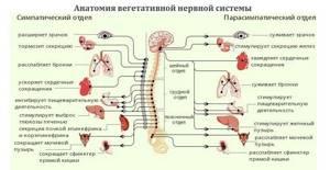 Вегето-сосудистая дистония: симптомы, лечение, причины