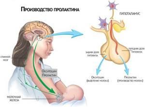 Пролактин: норма у женщин, почему повышен или понижен уровень гормона
