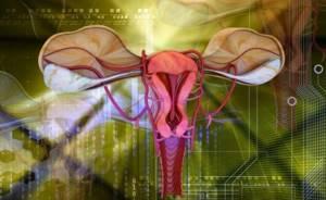 Седловидная матка: причины развития, как забеременеть, симптомы и диагностика