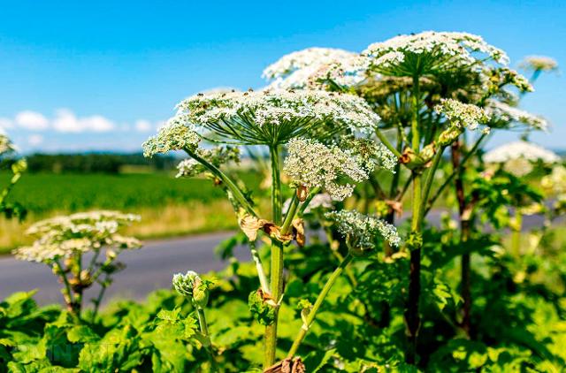 Аллергия на солнце - симптомы, лечение