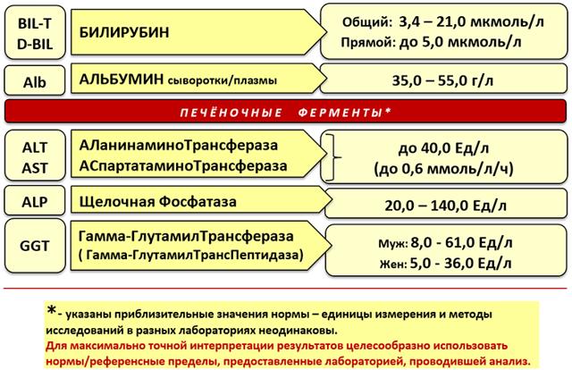 Печеночные пробы: норма, расшифровка, что входит, причины повышения результатов