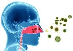 Боярышник: польза и вред, лечебные свойства и противопоказания