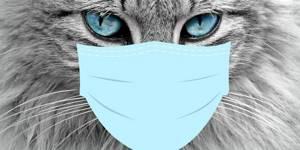 Чем можно заразится от собаки, кошки, попугая, морской свинки и других домашних животных, птиц, гызунов