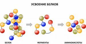 Биохимический анализ крови: норма, расшифровка, причины отклонения результатов